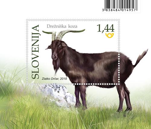 Drežniška koza