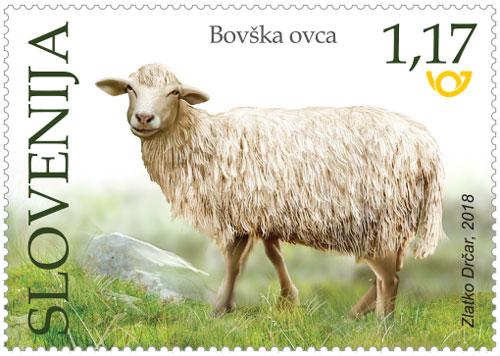 Bovška ovca